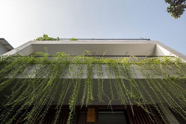 Cây xanh trong nhà phố, nhà phố xanh, kiến trúc xanh nhà phố