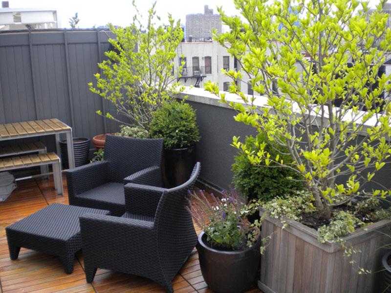 thiết kế vườn sân thượng